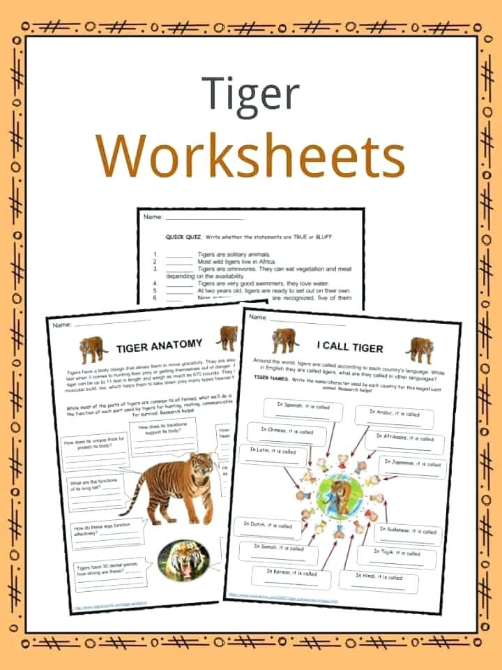 2nd Grade Habitat Worksheets Animals In their Habitats Worksheets – Keepyourheadup