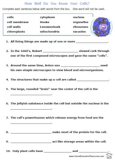 8th Grade Science Worksheets Pdf 507 Best Science Images