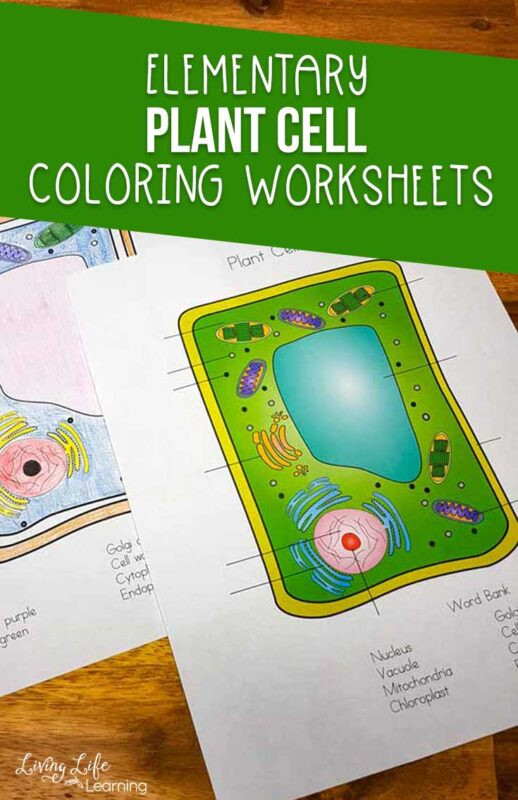 Cell Coloring Worksheets Animal Cell Coloring Worksheet