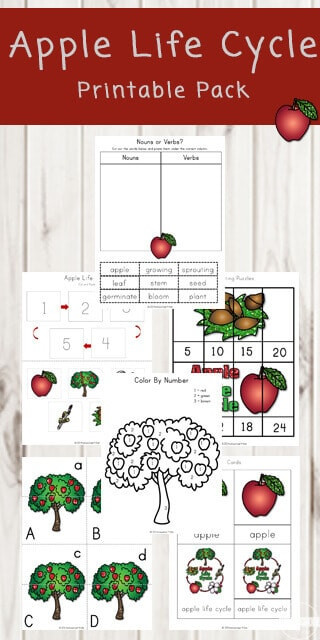 Free Printable Apple Worksheets Free Apple Life Cycle Printable Pack