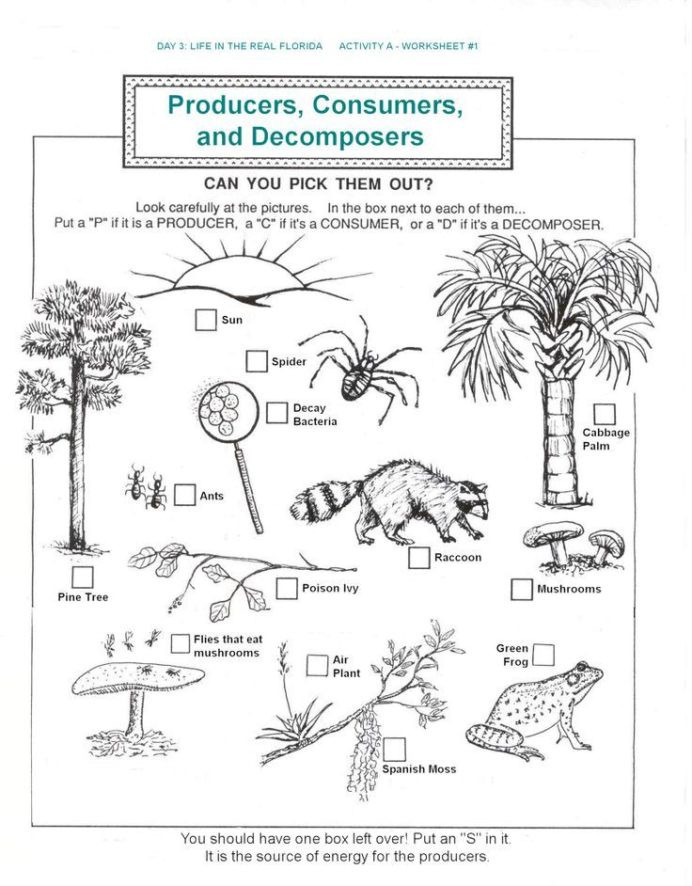 Free Printable Ecosystem Worksheets Free Printable Ecosystem Worksheets Worksheets Math