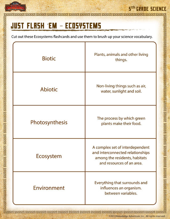Free Printable Ecosystem Worksheets Just Flash Em Ecosystems View – 5th Grade Worksheet – sod