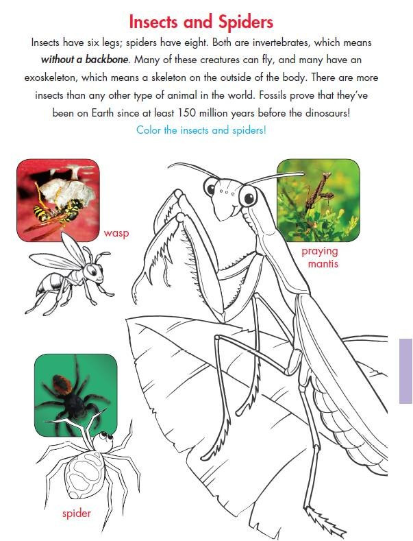 Insect Worksheets for First Grade New 154 First Grade Insect Worksheets