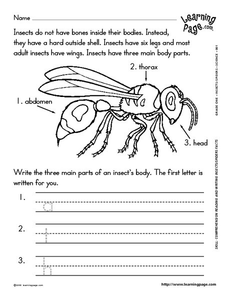Insect Worksheets for First Grade Reading and Writing About Insects Worksheet for 1st 2nd