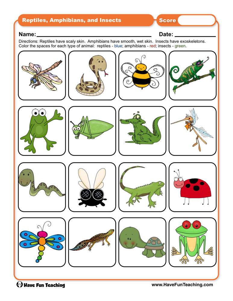 Insect Worksheets for First Grade Reptiles Amphibians and Insects Worksheet
