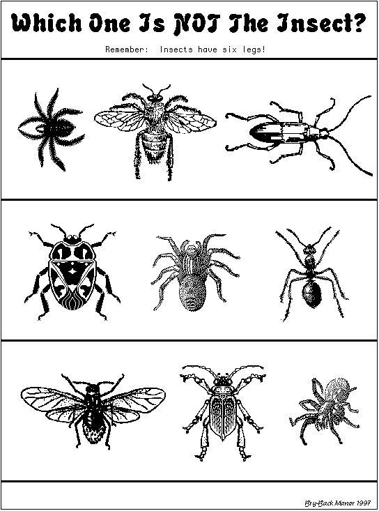 """Insect Worksheets for First Grade which One is Not An Insect"""" Worksheet"""