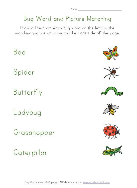 Insects Worksheets for Kindergarten Bug Matching Worksheet