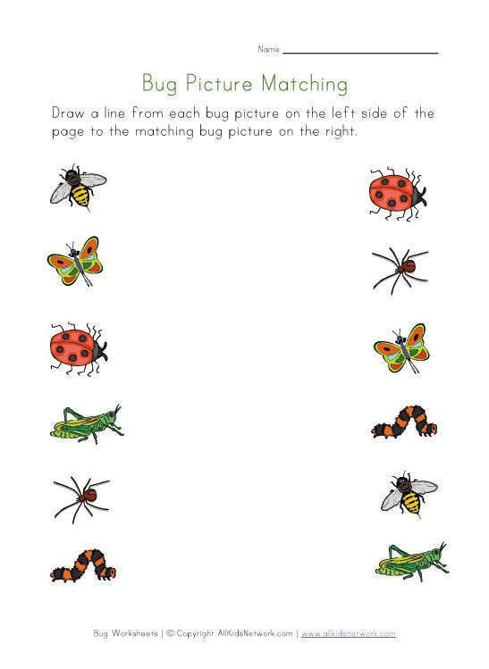Insects Worksheets for Kindergarten Bugs Worksheet for Kids Picture Matching
