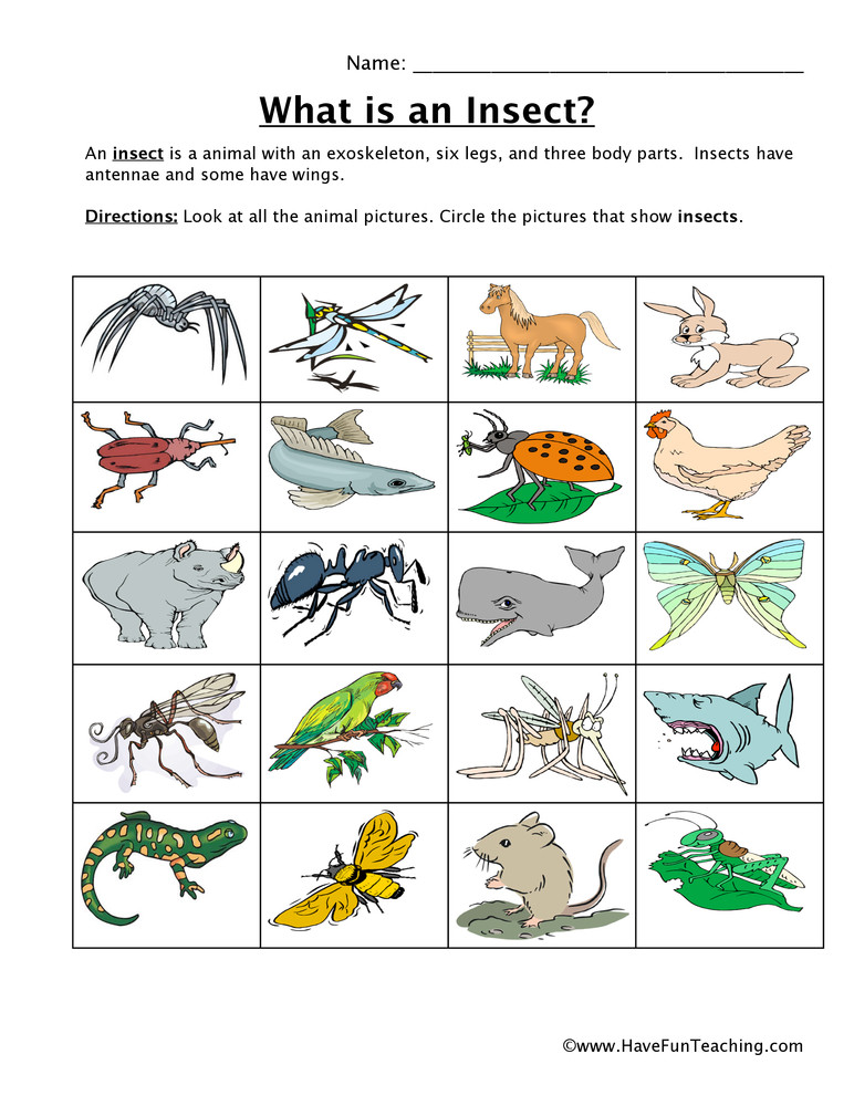 Insects Worksheets for Kindergarten Insect Classification Worksheet