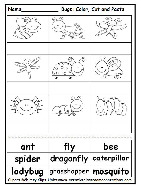 Insects Worksheets for Kindergarten Pin On Science