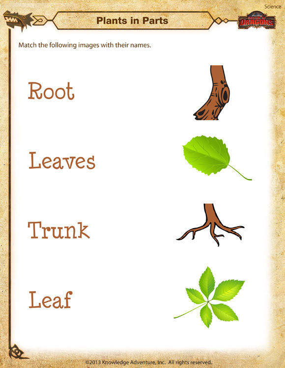 Kindergarten Science Worksheets Plants In Parts Worksheet – Kindergarten Science Printable – sod
