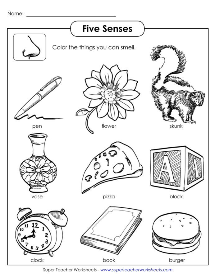 Kindergarten Science Worksheets Worksheet Senses Printable Worksheets and Activities for