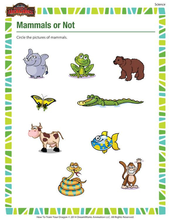 Mammals Worksheet First Grade Mammals Not – Science Printable for Kindergarten