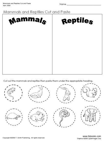 Mammals Worksheet First Grade Pin On Unit Ideas Mammals
