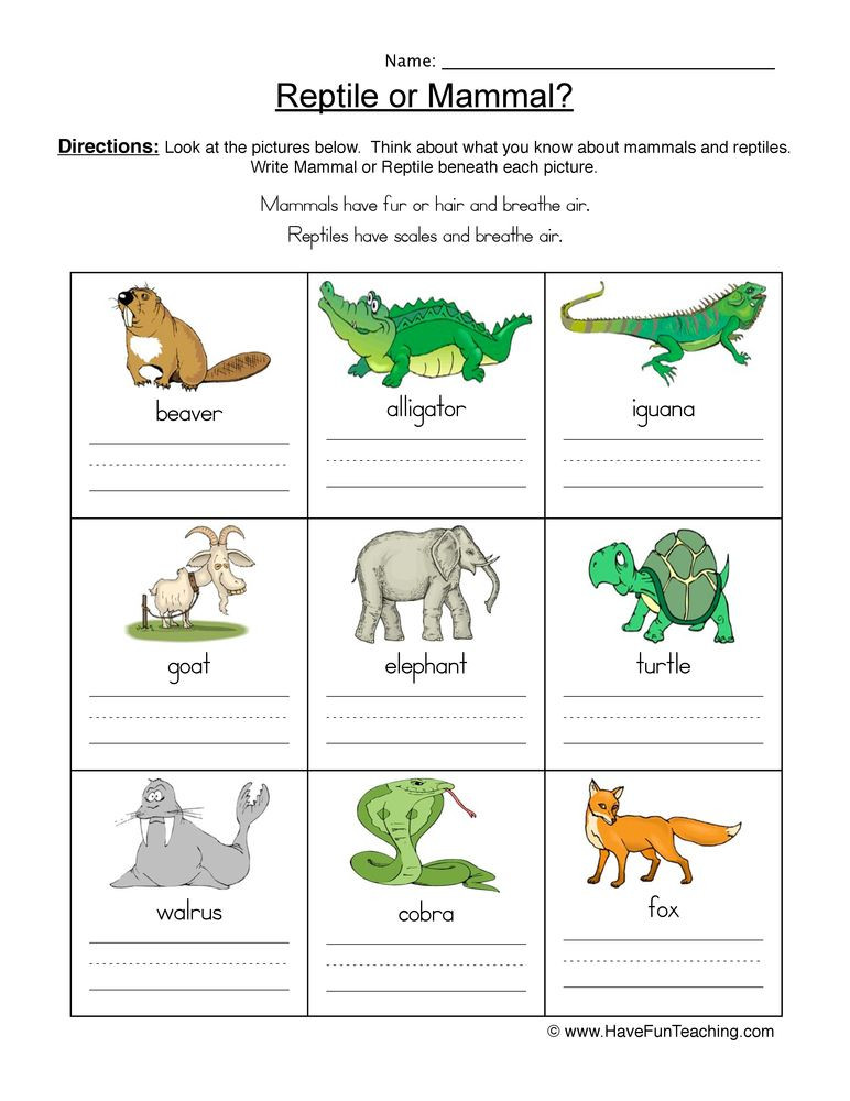 Mammals Worksheet First Grade Science Worksheets Resources