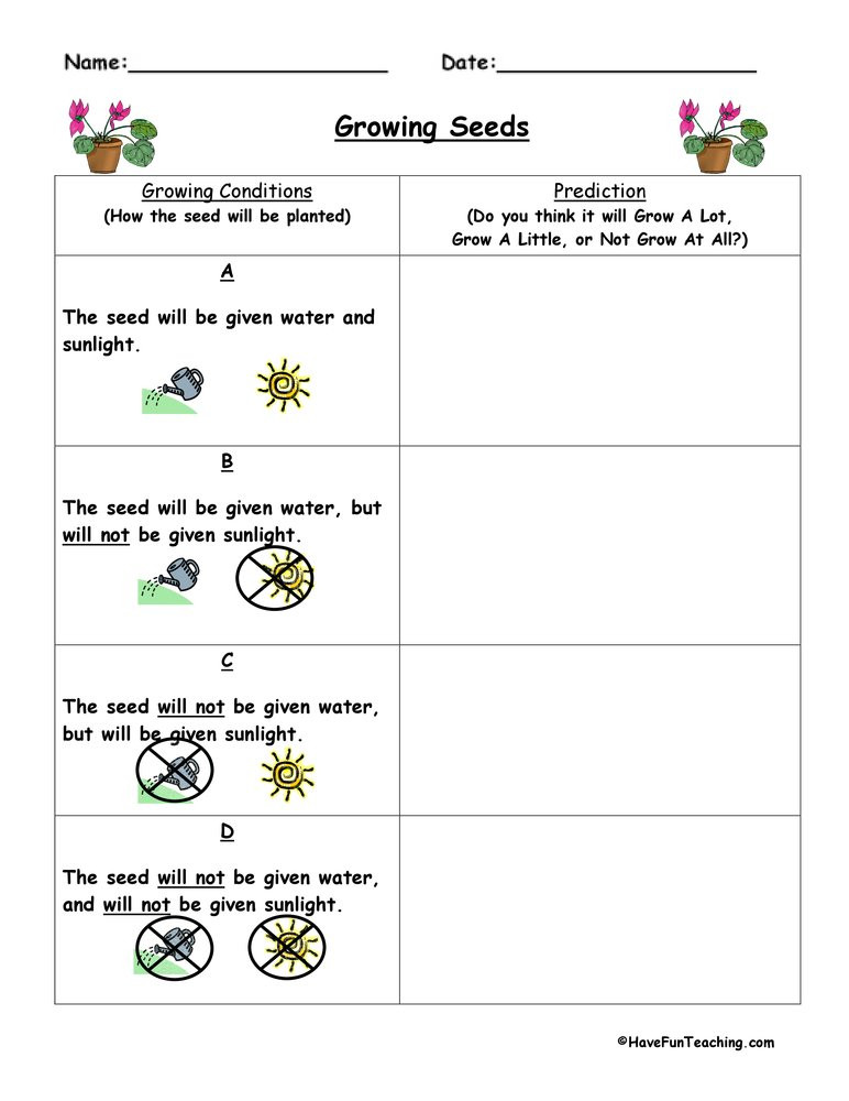 Prediction Worksheets for 2nd Grade Plant Predict and Infer Worksheet