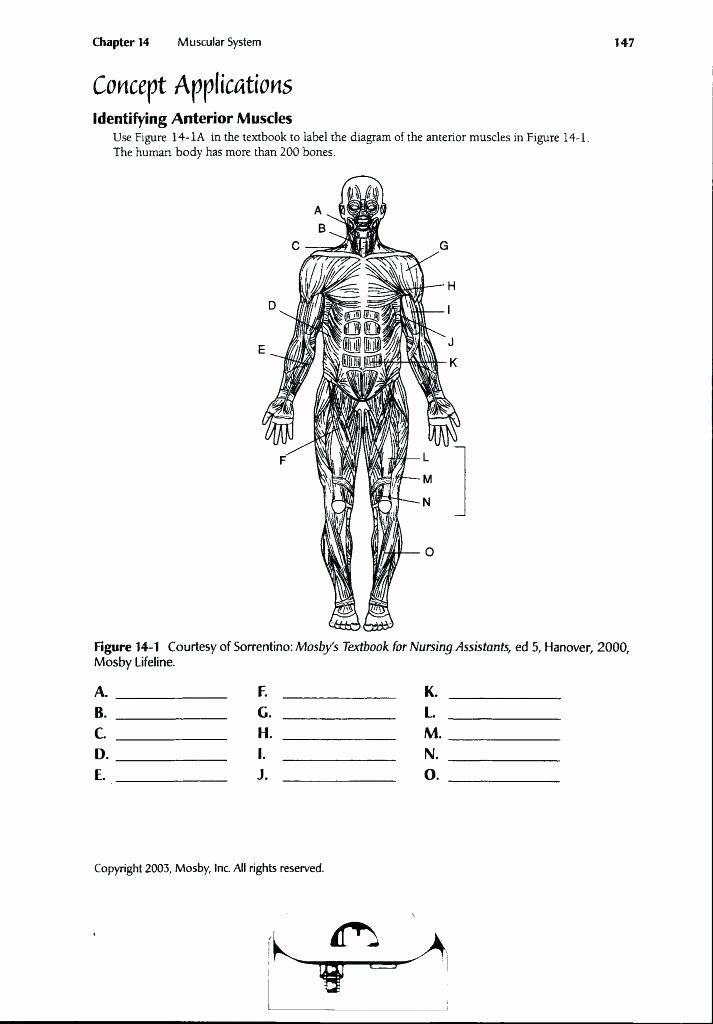 Printable Anatomy Labeling Worksheets Printable Anatomy Labeling Worksheets Inspirational Funky