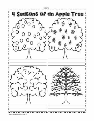 Seasons Worksheets for Kindergarten An Apple Tree In 4 Seasons Worksheets