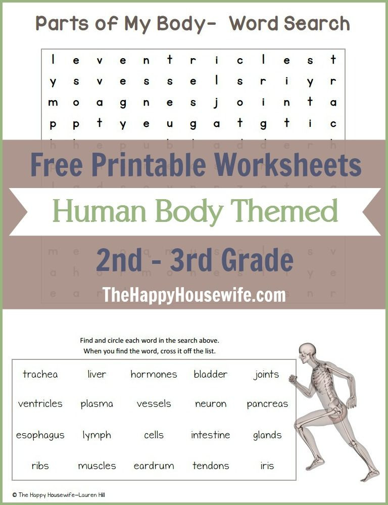 3rd Grade Human Body Worksheets Human Body themed Worksheets Free Printables