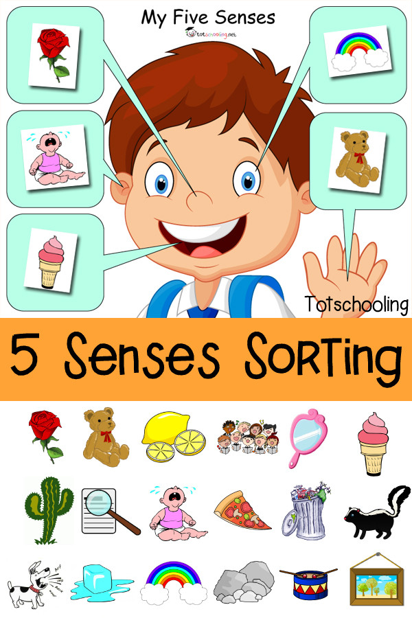 5 Senses Printable Worksheets Five Senses sorting Printable