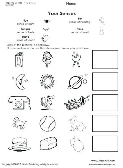 five senses activities for kindergarten snapshot image of beginning science worksheets about the five senses five senses curriculum kindergarten