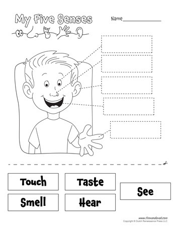 5 Senses Worksheet for Kindergarten Free Five Senses Worksheets for Kids