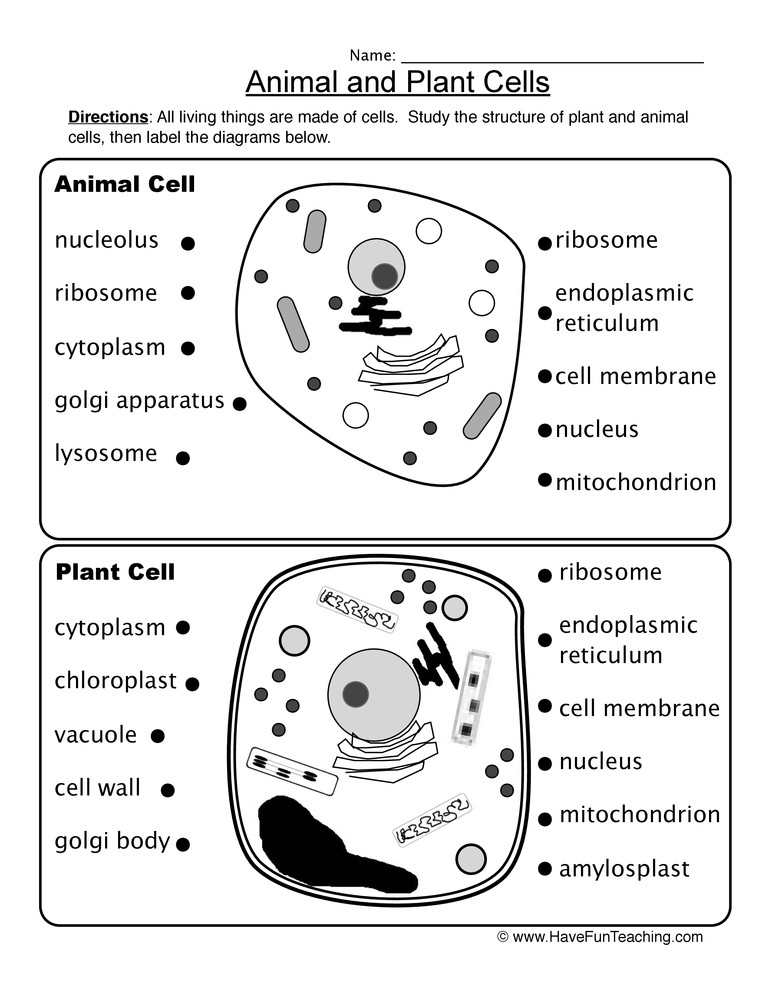 5th Grade Cell Worksheets Animal and Plant Cells Worksheet