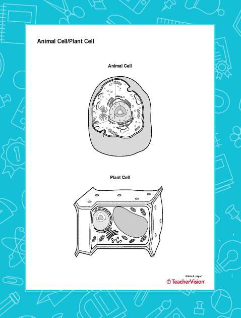 5th Grade Cell Worksheets Animal Cell Plant Cell Blank Printable Printable 6th