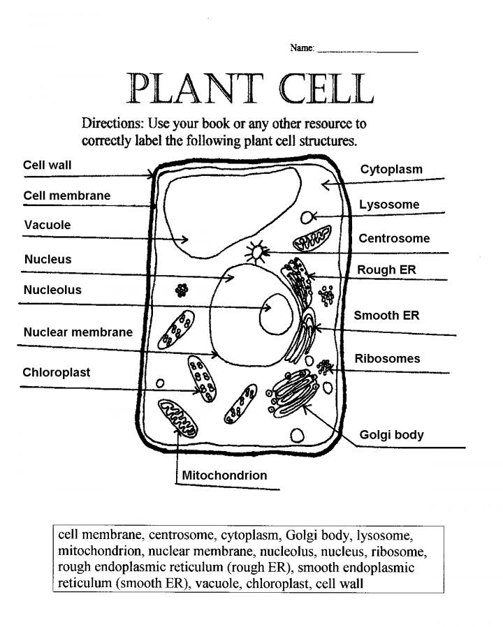 5th Grade Cell Worksheets Pin On 5th Grade Worksheet