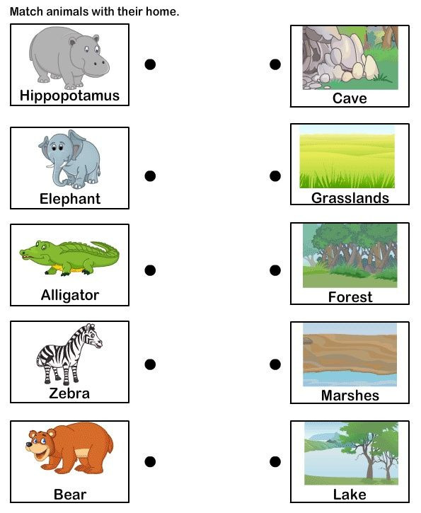 Animal Habitat Worksheets for Kindergarten Students Could Match the Animal to Its Habitat Independently
