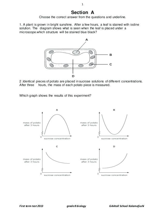 Eighth Grade Science Worksheets 7th Grade Science Practice Worksheets – Momami