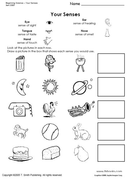 Five Senses Kindergarten Worksheet Beginning Science Unit About Your Five Senses