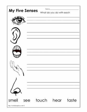 Five Senses Kindergarten Worksheet Five Senses Worksheets