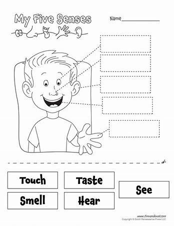 Five Senses Kindergarten Worksheet My 5 Senses Worksheets