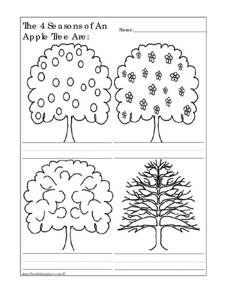 Four Seasons Kindergarten Worksheets the 4 Seasons Of An Apple Tree are Worksheet for