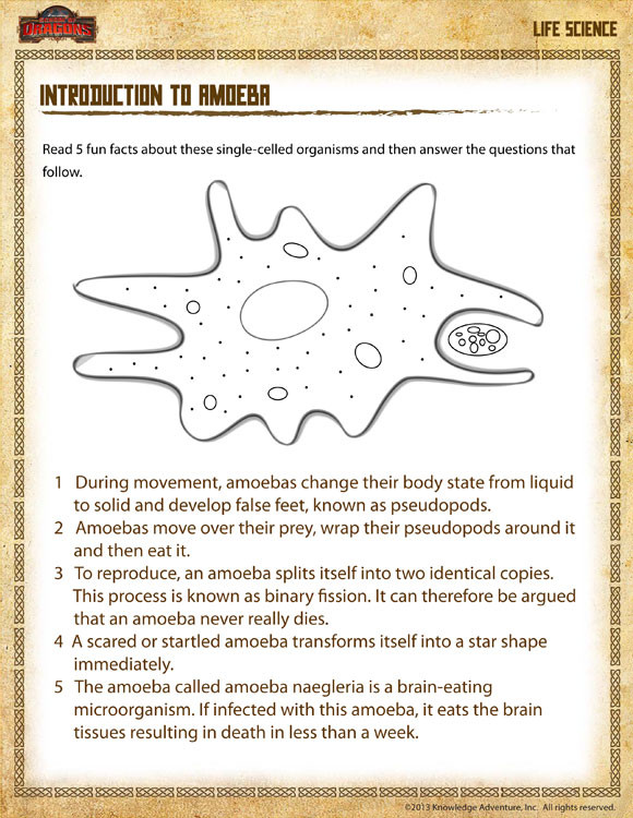 Free Fourth Grade Science Worksheets Introduction to Amoeba View – Science Worksheet Grade 4 – sod