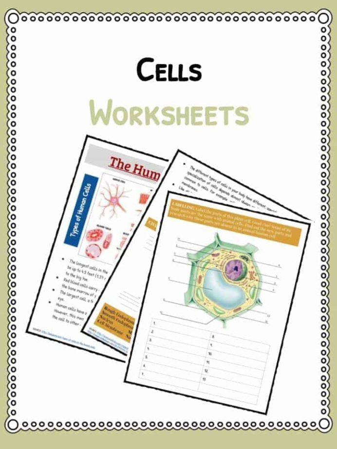 Free Printable Biology Worksheets Cell Facts Information Worksheet Animals Human Plants