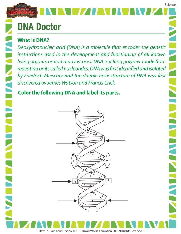 Free Printable Biology Worksheets Dna Doctor Printable Science Worksheets for 7th Grade