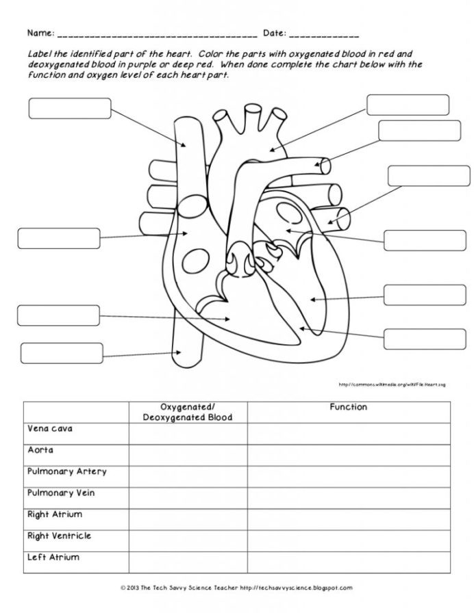 Free Printable Biology Worksheets Human Anatomy Labeling Worksheets with Body Biology