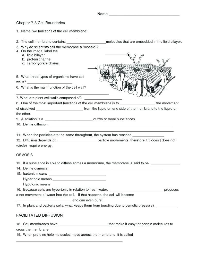 Free Printable Biology Worksheets Ratio Worksheets