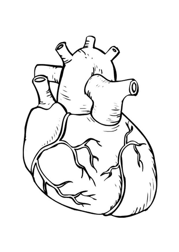 Heart Coloring Worksheet Human Heart Coloring Pages Coloring Home