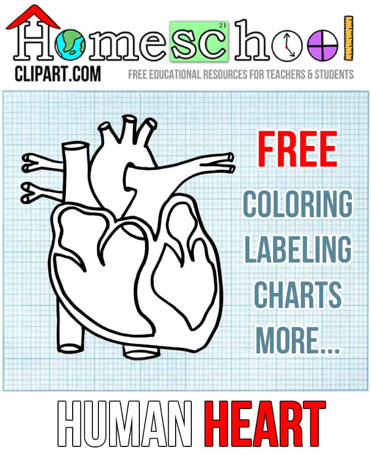 Human Heart Coloring Worksheet Heart Anatomy Coloring Page