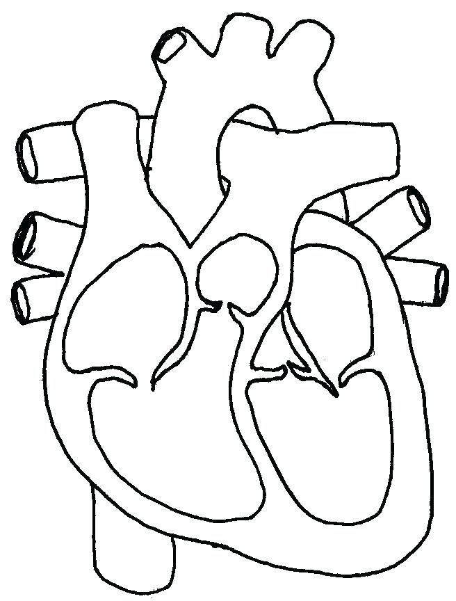 Human Heart Coloring Worksheet Human Heart Coloring Pages Science Circulatory System Page