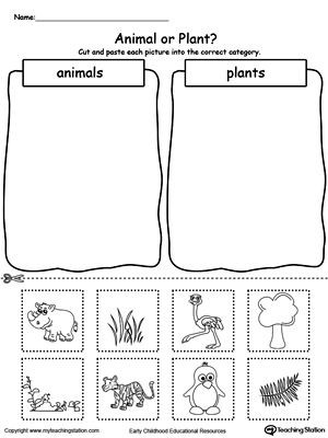 Kindergarten sorting Worksheets Early Childhood sorting and Categorizing Worksheets