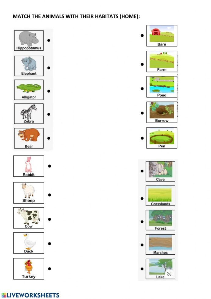 Line Plot Worksheet 5th Grade Animal Habitats and Home Interactive Worksheet Worksheets