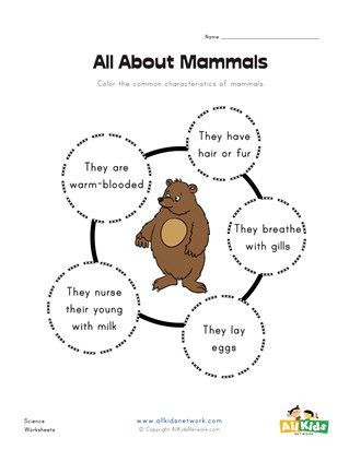 Mammal Worksheets First Grade All About Mammals Worksheet