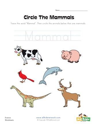 Mammal Worksheets First Grade Circle the Mammals Worksheet