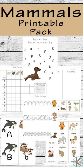 Mammal Worksheets First Grade Free Mammals Printable Pack