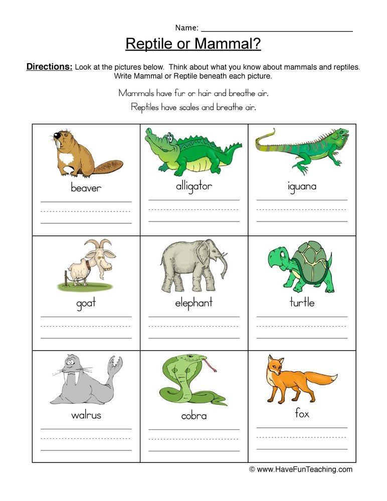 Mammal Worksheets First Grade Mammal Vs Reptile Worksheet