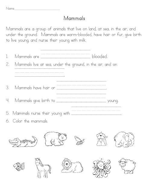 Mammal Worksheets First Grade Mammals